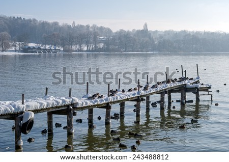 """A lot of resting ducks on an old boardwalk at the lake """"Ammersee"""" near Munich in Bavaria - stock photo"""