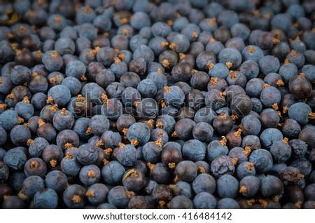 a lot of ripe juniper galberry - stock photo