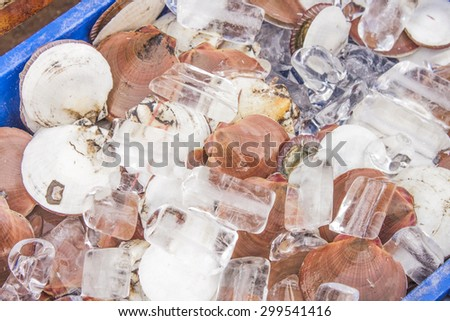 A lot of shellfish and ice, at a market - stock photo