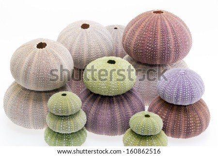 a lot of skeletons of sea shell green and violet  echinoidea isolated on white background - stock photo