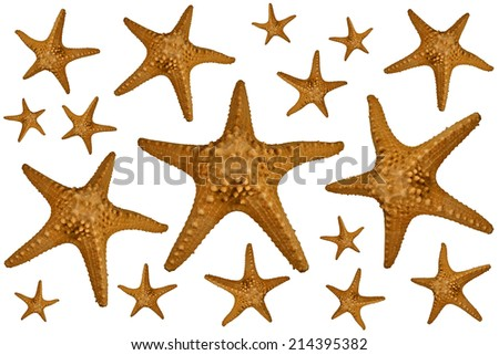 A lot of starfishes isolated on white - stock photo