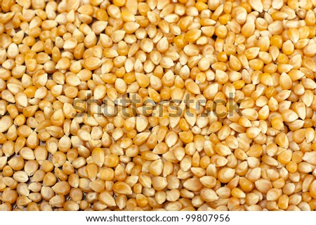 A lot of yellow corn grain background - stock photo
