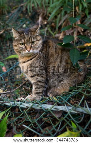A lovely cat in the nature - stock photo
