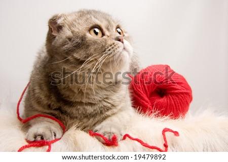 a lovely kitten - stock photo