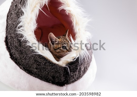 a lovely kitten sleeping in his small cat's bed - stock photo