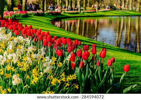 A lovely spring landscape park. Blooming flowers. - stock photo