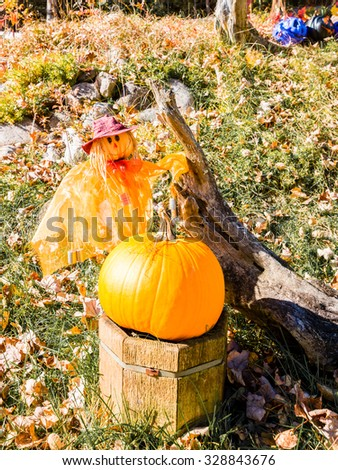 A lovely straw girl and a pumpkin