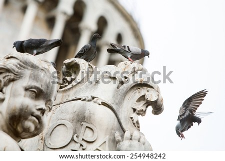 A low angle view of a small group of pigenons standing on a statue of Pisa and one of them taking off. - stock photo