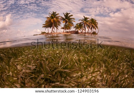 A low-lying sandy island with coconut palms is surrounded by a shallow sea grass bed off of Belize. - stock photo
