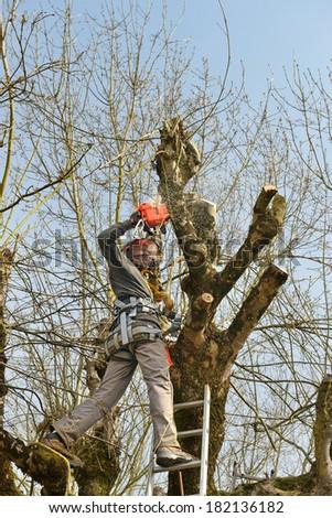a lumberjack prune a tree    - stock photo