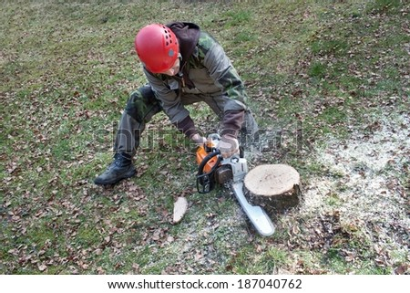 A lumberjack working with a chainsaw, (Betula) - stock photo