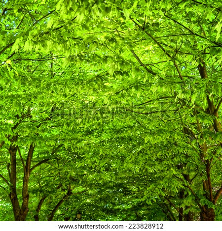 A luminous green leaf canopy in a park in Sirmione at the Lake Garda inspired me for this image detail - stock photo