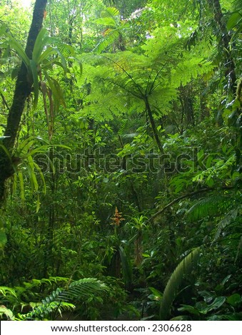 A luxuriant and dense jungle scene with a large fern tree as the main focal point. - stock photo