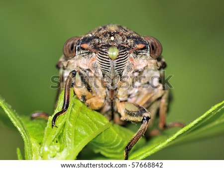 A macro close-up of the face of a cicada, perched on a plant.
