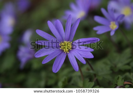 Light Colored Flowers