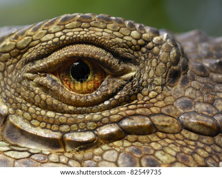 A macro of a green iguana eye - stock photo