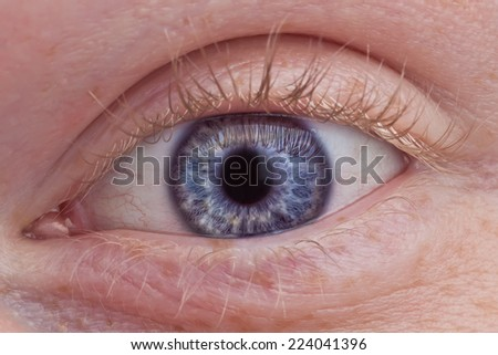 A macro photo of a blue human eye.