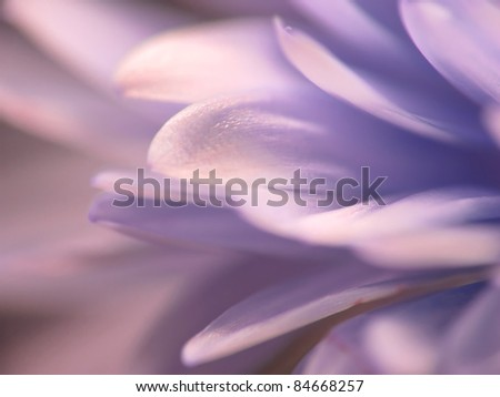 A macro photo of flower beauty