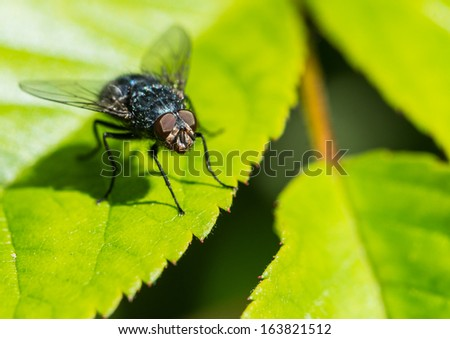 A macro shot of a fly sitting on a leaf.