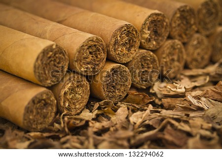 A macro shot of cigars on tobacco. These cigars are robusto sized. - stock photo