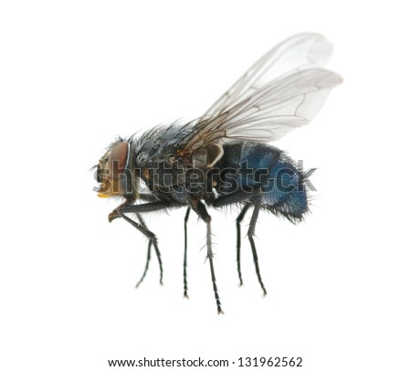 A macro shot of  fly - stock photo