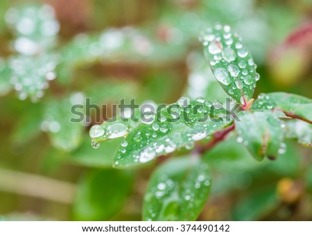 A macro shot of some dewdrops on a green leaf. - stock photo