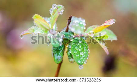 A macro shot of some new spring leaves covered in raindrops. - stock photo