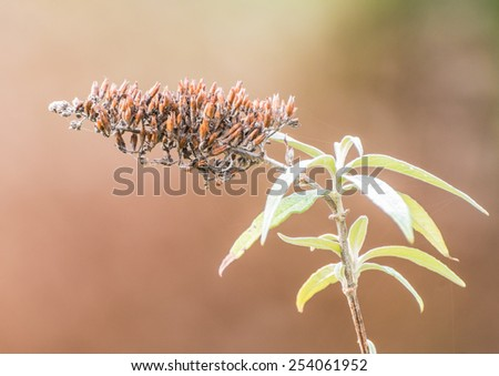 A macro shot of the decaying remains of a butterfly bush bloom. - stock photo
