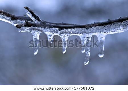 A macro shot of the detail of freezing rain on the branch of a tree. - stock photo