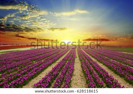 stock-photo-a-magical-landscape-with-sun