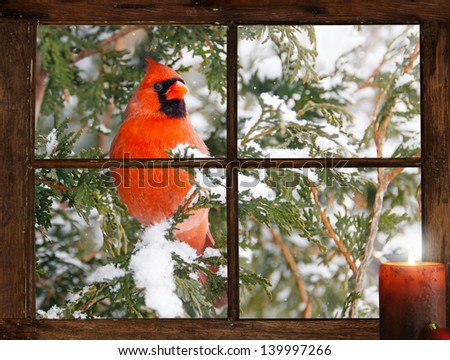 A male Northern Cardinal in the snow peeks happily into a tiny farmhouse window with a festive candle burning on the windowsill on Christmas morning. Part of a series. - stock photo