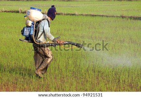 A man spraying pesticides in the paddy field - stock photo