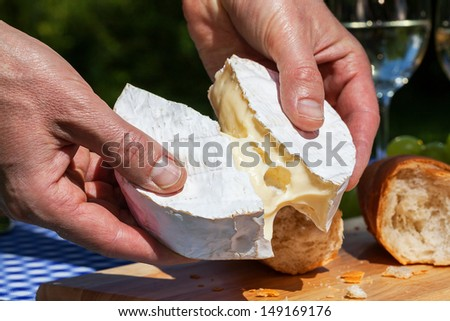 A man tearing camembert cheese into two pieces - stock photo