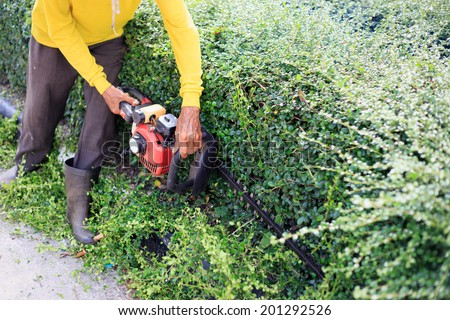 A man trimming hedge at the street - stock photo