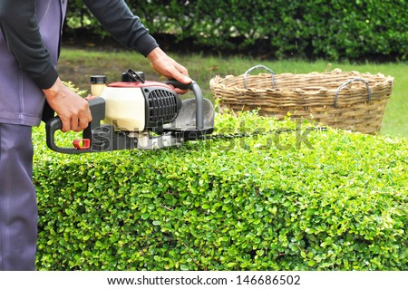 A man trimming hedge with trimmer machine - stock photo