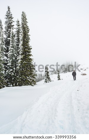 a man walking on a path cover with snow in paradise area,scenic view of mt Rainier National park,Washington,USA.