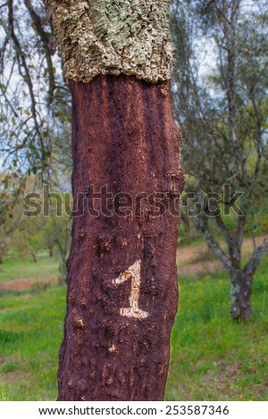 A marked corked tree where a number indicates the last year it was stripped - stock photo