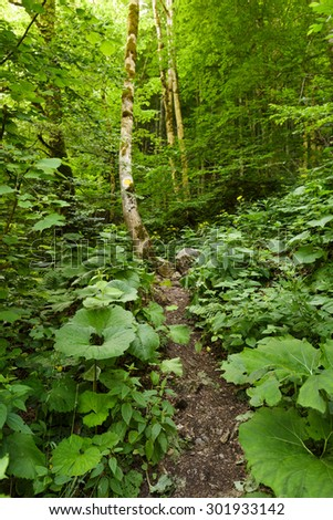 A marked trail through the forest on a summer day - stock photo