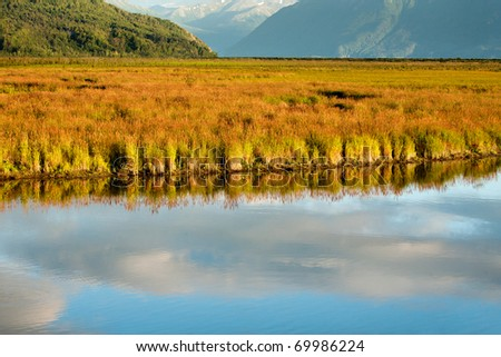 A marsh in southern Alaska, with cloud reflections in the water and the golden colors of late-afternoon in summer.