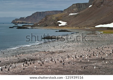 A massive penguin rookery has been established on a rocky beach in the South Shetland Islands.  The penguins feed primarily on Antarctic krill in the Southern Ocean.