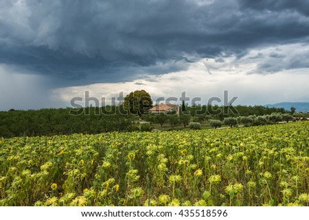 A massive threatening dark thundercloud moves over private house and sunflower field
