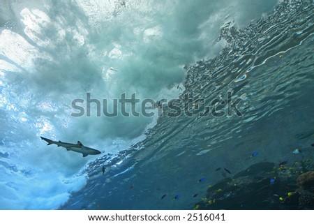 a massive wave at the Georgia Aquarium - stock photo