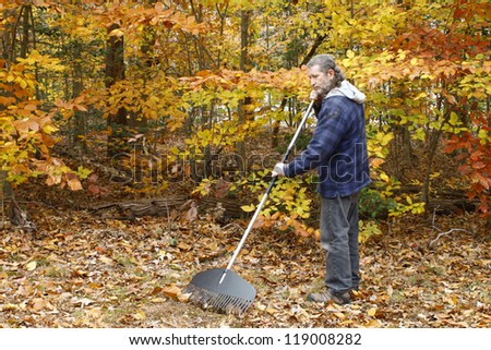 A mature long gray haired man with a beard raking leaves outside on a fall day in the yard - stock photo