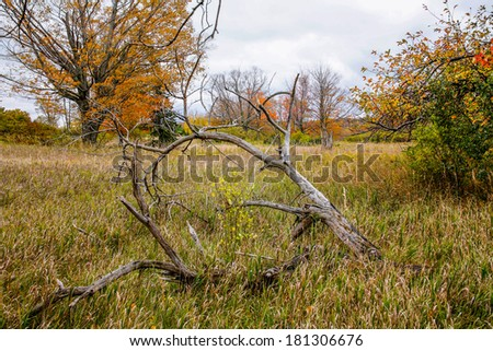 A Meadow And fallen Tree In Autumn, Near Point Betsie Michigan, USA - stock photo