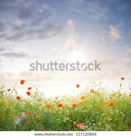a meadow of wild flowers under beautiful sundown - stock photo