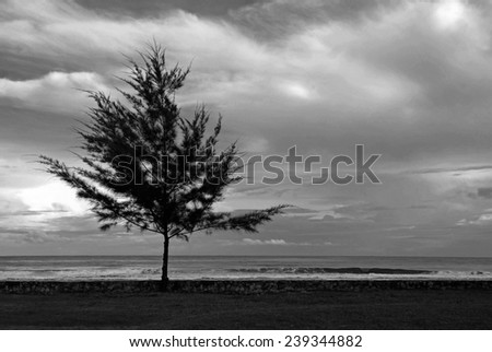 A melancholic silhouete of a fig tree in black and white - stock photo