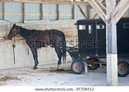 A Mennonite carriage with horse attached, parked in an old barn. - stock photo
