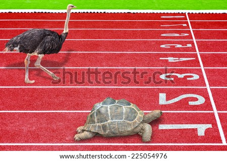 a metaphor for under working a powerful leader or small business competing against giants as turtle and ostrich effort running competition sport result is winning turtle concept of business success - stock photo