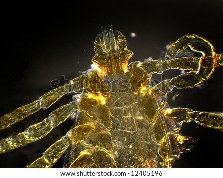 A microscopic darkfield view of the front part of a mite - stock photo