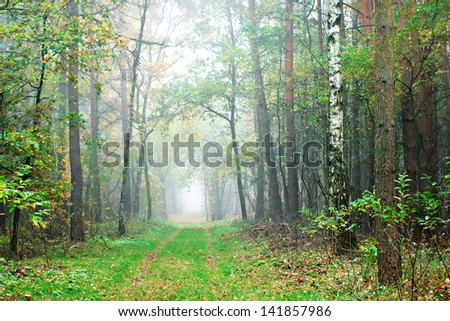 A misty laneway in autumn
